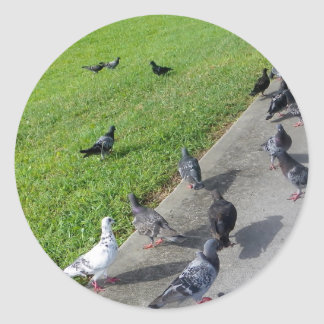 pigeon family reunion.JPG Round Sticker