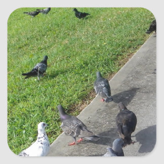 pigeon family reunion.JPG Square Sticker