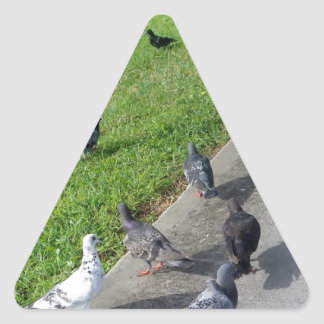 pigeon family reunion.JPG Triangle Sticker