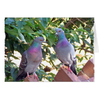 Pigeon friends - Card
