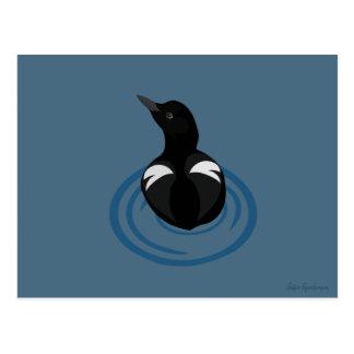 Pigeon Guillemot Vector Art Postcard