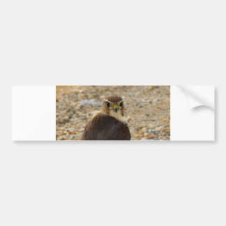 Pigeon Hawk Bumper Sticker