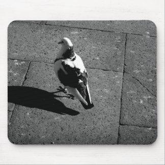 Pigeon Mousepad
