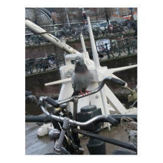 Pigeon on a Bicycle Postcard