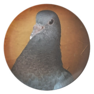 Pigeon Plate