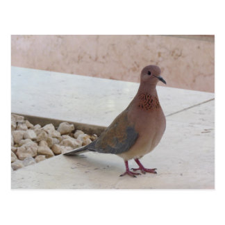 Pigeon postcard, customize postcard