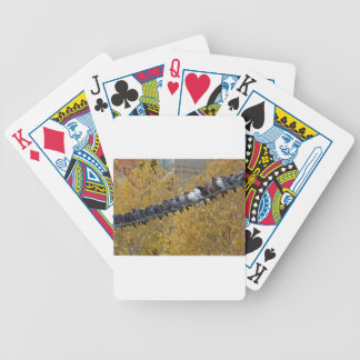 Pigeons Bicycle Playing Cards