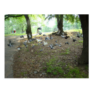 Pigeons in mid flight, Washington Park Postcard