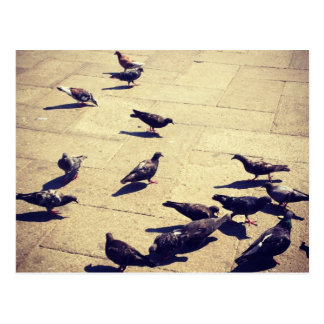 Pigeons in Venice Postcard