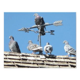 "pigeons 4.25"" x 5.5"" invitation card"