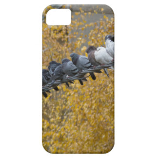 Pigeons iPhone 5 Cover