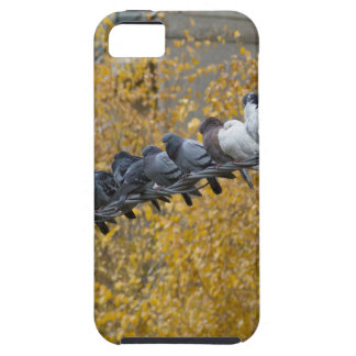 Pigeons iPhone 5 Covers