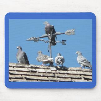pigeons mouse pad