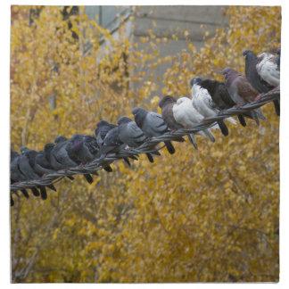 Pigeons Napkin