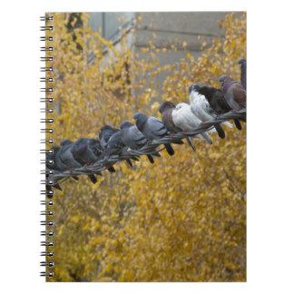 Pigeons Notebooks
