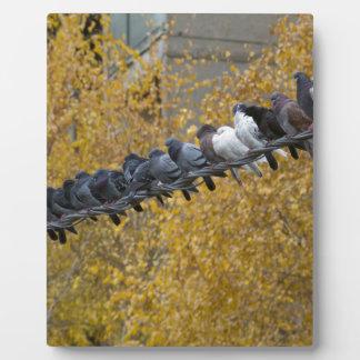 Pigeons Plaque