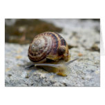 Piggyback Snail Ride Greeting Card