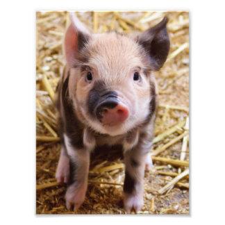 Piglet Photo