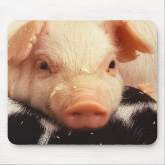 Piglet Pig Adorable Face Snout Mouse Pad