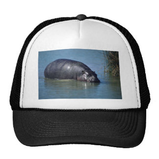 Pigmy Hippo adult in water Trucker Hat