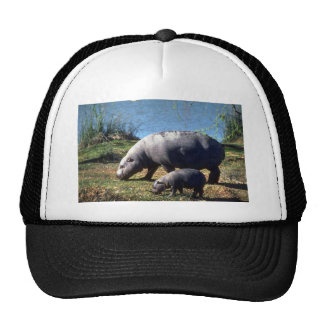 Pigmy Hippos cow with small calf Mesh Hat