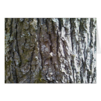 Pignut Hickory Tree Bark Card