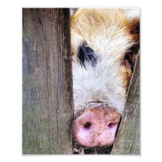 PIGS PHOTO PRINT
