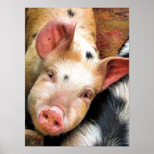 PIGS PRINT