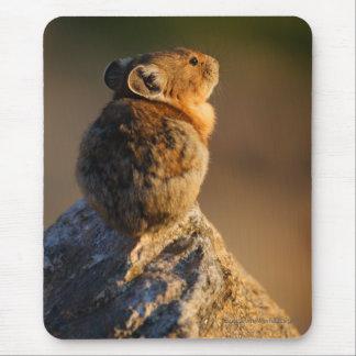 pika mouse pad