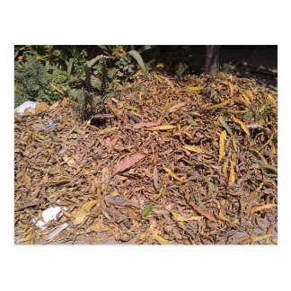 Pile of dried leaves and grass post card