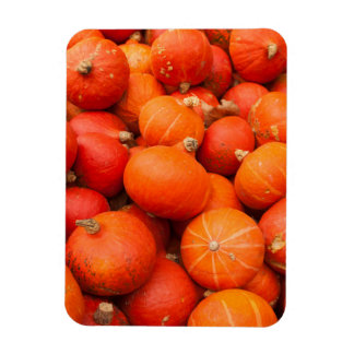 Pile of small pumpkins, Germany Rectangular Photo Magnet