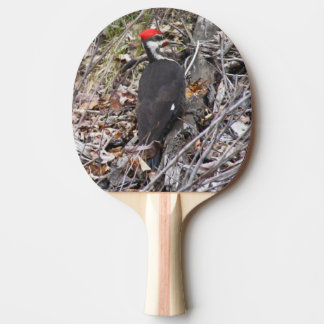 Pileated Woodpecker Pecking Ping Pong Paddle