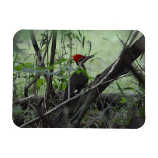 Pileated Woodpecker photo magnet