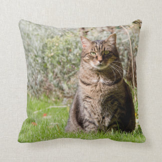 Pillow - Cat - two images - 01