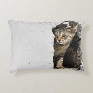 Pillow - Cute Greek Kitten on Santorini, Greece