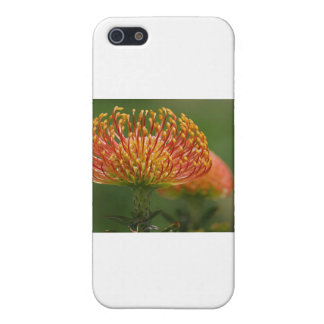 pincushion-protea iPhone 5/5S cover
