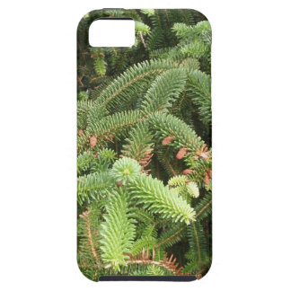 Pine Branches iPhone 5 Cases
