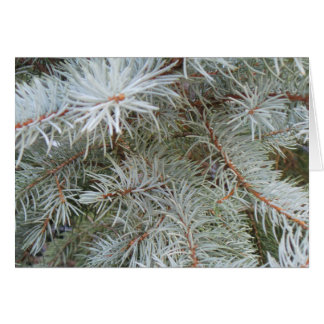 Pine Christmas Card