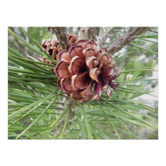 pine cone array poster