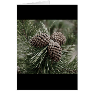 Pine cone Christmas Card ~ blank