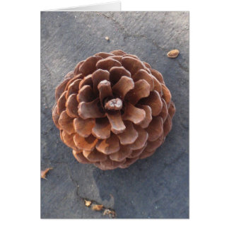 Pine Cone I Greeting Card