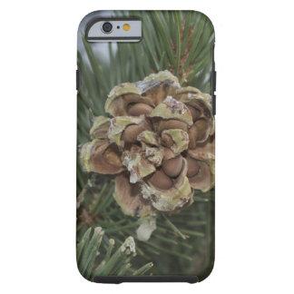 pine cone tough iPhone 6 case