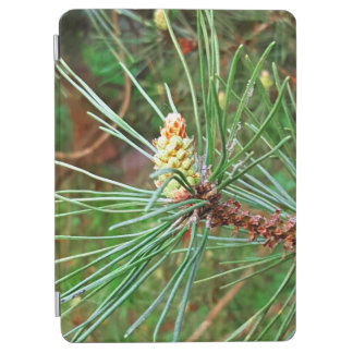 Pine cone tree needles photograph iPad air cover