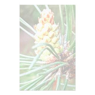 Pine cone tree needles photograph stationery