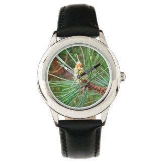 Pine cone tree needles photograph watch