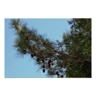 Pine Cone Tree Poster