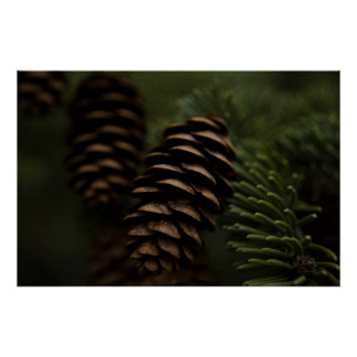 Pine Cones in the Woods Nature Photography Posters