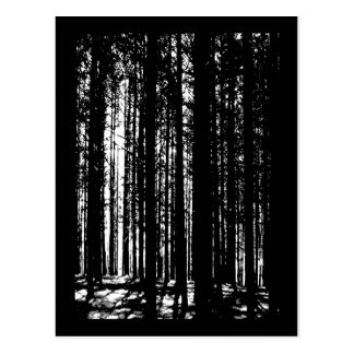 pine forest post card