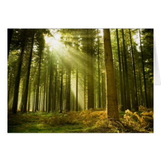 Pine forest with sun shining greeting card