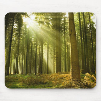 Pine forest with sun shining mouse pad